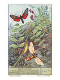 Moths and Caterpilar Posters