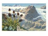 Mountain Flowers, Swiss Alps Prints