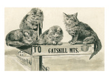 Cats on Catskill Mts. Sign Posters