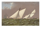 Yacht Regatta Prints