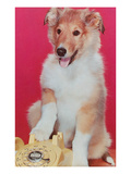 Baby Collie with Telephone Prints