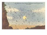 Bat Flight, Carlsbad Caverns, New Mexico Posters