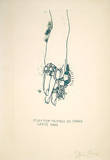 Dorian Gray, Rings on Hand (30) Limited Edition by Jim Dine