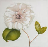 Camelia 2012 Limited Edition by Josef Werner