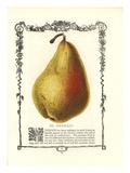 St. Germain Pear Posters