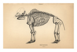 Fossil Skeleton of the Great Mastodon Print