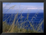 View of the Sea Through Grasses Atop a Hill Prints by Kebbon Marcia