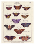 Histoire Naturelle 2 Posters by Terrence Wesley