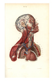 Circulatory System to the Head and Torso Giclee Print by  Leveille