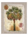 Linen Cabbage Palm Tree Kunstdruck von Chad Barrett
