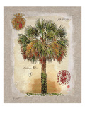 Linen Cabbage Palm Tree Poster by Chad Barrett