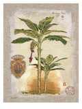 Linen Banana Palm Tree Kunstdrucke von Chad Barrett