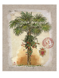 Linen Fan Palm Tree Print by Chad Barrett