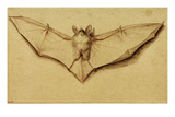 Bat with Spread Wings, c.1523 Giclee Print by Hans Holbein the Younger