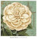 Camellia Study II Plakater af Suzanne Nicoll
