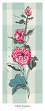 Hollyhock I Posters by Ouida Touchon