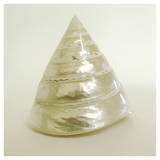 Shell I (oversize) Affiches par Darlene Shiels