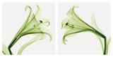 Lilies [Positive] Affiches par Steven N. Meyers