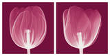 Tulips [Negative] Plakater av Steven N. Meyers