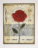 Untitled - Rose 2 Collectable Print by Tighe O'Donoghue