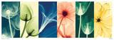 Steven N. Meyers - Flora Plakát