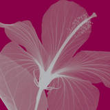 Hibiscus/Silver (small) Posters by Steven N. Meyers