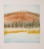 Birch Grove Collectable Print by Harvey Kidder