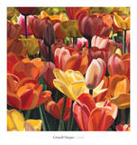 Coral Print by Cristall Harper
