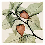 Japanische Laternen Kunstdrucke von Steven N. Meyers