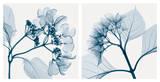 Steven N. Meyers - Hydrangeas [Positive] Obrazy