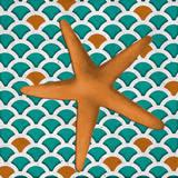 Patterned Shell II Art by Elizabeth Medley