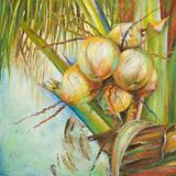 Patricia's Coconuts II Prints by Patricia Quintero-Pinto