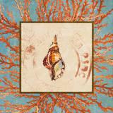 Coral Medley Shell IV Prints by Lanie Loreth