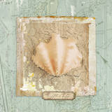 Seashore Collection I Prints by Elizabeth Medley