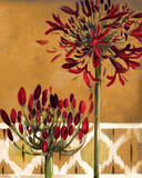 Red Lily of the Nile II Prints by Patricia Quintero-Pinto