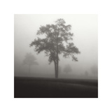 Fog Tree Study I Giclee Print by Jamie Cook