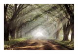 Evergreen Plantation Giclee Print by Mike Jones