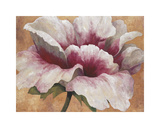 Pink Begonia Giclée-tryk af Maria Torróntegui