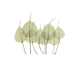 Woodlands I Giclee Print by  Acee