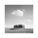 Cypress Trees Giclee Print by Jean Miele
