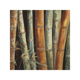 Caribbean Bamboo I Giclee Print by Tita Quintero