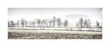 Winter Silence Giclee Print by Todd Ridge