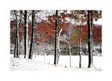 SnowFall Giclee Print by Burney Lieberman