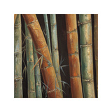 Caribbean Bamboo II Giclee Print by Tita Quintero