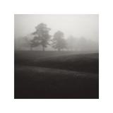 Fog Tree Study II Giclee Print by Jamie Cook