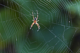 Spider in Web, Cerro Dragon, Santa Cruz Island, Galapagos Islands, Ecuador, South America Photographic Print by Michael Nolan