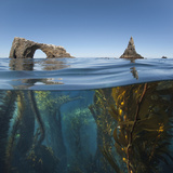 Underwater Photo of Anacapa Arch and Kelp, Channel Islands National Park, California, USA Photographic Print by Antonio Busiello