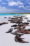 Galapagos Sea Lions (Zalophus Wollebaeki), Gardner Bay, Espanola Islands, UNESCO Site, Ecuador Photographic Print by Michael Nolan