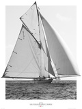 Les Voiles de Saint Tropez Prints by Plisson Philip