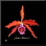 Vivid Orchid II Mounted Print by Ginny Joyner